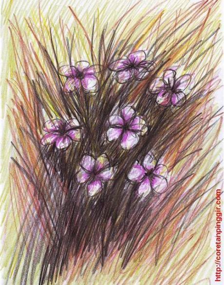 Bunga Semak 2